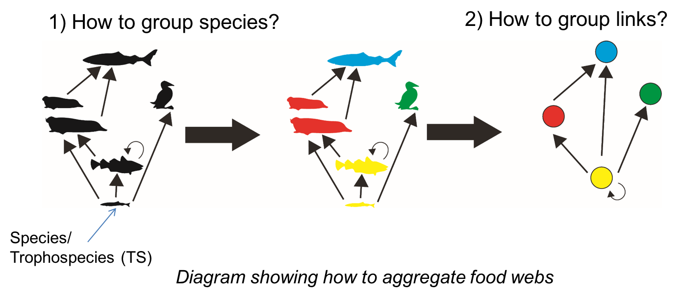 Fig. 1 Steps to build trophospecies in a food web: aggregation of species and links
