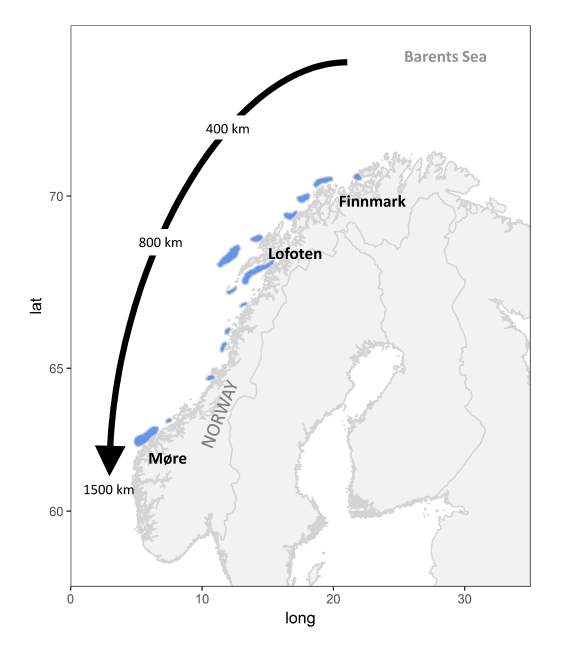 The spawning migration of the Northeast Arctic cod - MARmaED
