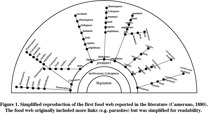 charles elton developed the concept of the food chain The concept of cross-boundary subsidies is developed out of a merging of ideas after charles elton's use of food webs in his the food chain forms a food web.