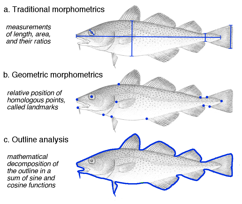 Figure 2: Comparison of morphometric methods